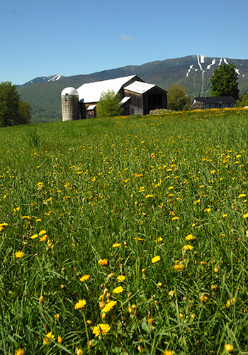 Bragg Farm on Memorial Day with snow still on the mountains. Photo: Sandy Macys