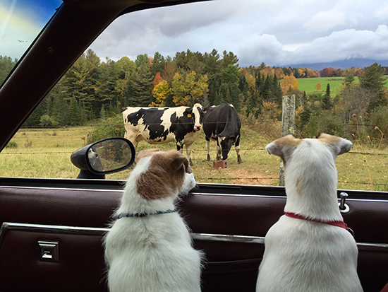 Taking the dogs for a fall ride by Brook Cunningham