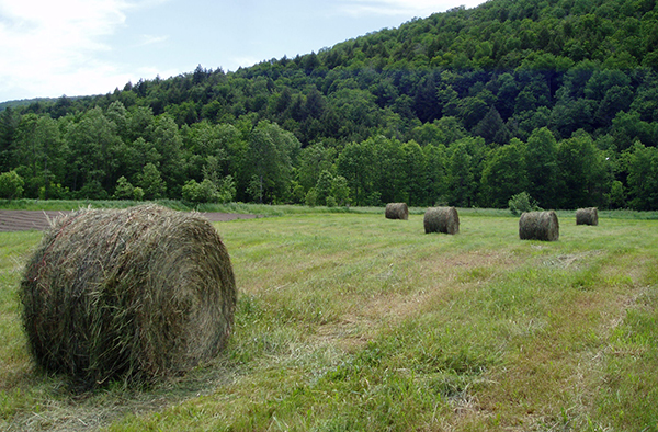 hay rolls in the Mad River Valley