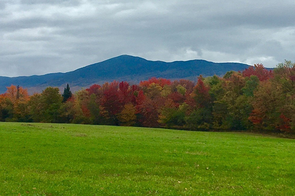 Early foliage on display (2017) below the summit of Mt. Abraham in Lincoln, Vermont.