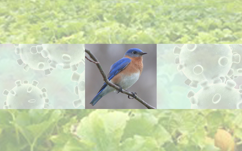 VT Bluebird Project provides creative outlet