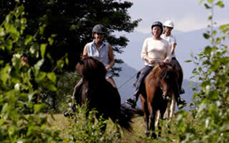 Icelandic Horse Farm seeing more local riders