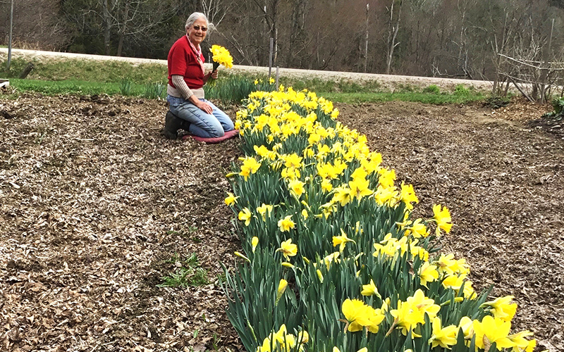 Carol Collins in the daffodil garden.